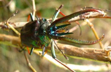 insectos-camping-queulat