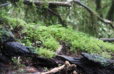 musgos-bosque-encantado